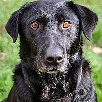 Adopt A Pet :: Bernie - Mount Holly, NJ