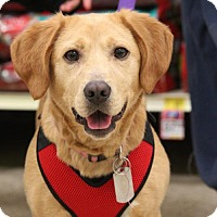 Adopt A Pet :: Iz - Gilbertsville, PA