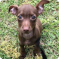Adopt A Pet :: Flynn rider - Garner, NC
