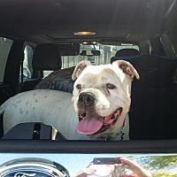 Adopt A Pet :: Janie - Beverly Hills, CA
