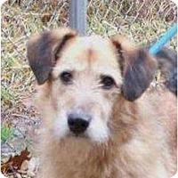 Adopt A Pet :: Trixie - Toronto/Etobicoke/GTA, ON