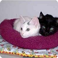 Adopt A Pet :: Ebony - Boston, MA