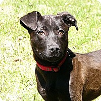 Adopt A Pet :: Wally - Mocksville, NC