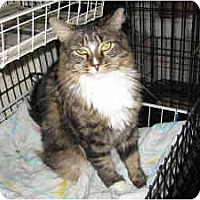 Adopt A Pet :: Fuzz Buzz - New York, NY