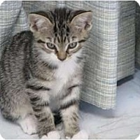 Adopt A Pet :: Baby - Port Republic, MD