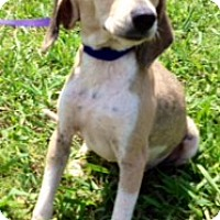 Adopt A Pet :: FAITH - Glastonbury, CT