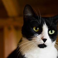 Adopt A Pet :: Minnie - Eureka, CA