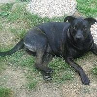 Terrier (Unknown Type, Medium) Mix Puppy for adoption in Trenton, New Jersey - Nicole