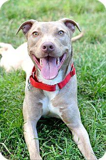 Terrier (Unknown Type, Medium)/Hound (Unknown Type) Mix Dog for adoption in Cranford, New Jersey - Phoebe