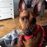 Adopt A Pet :: Rusty - Wilton, NY