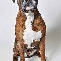 Adopt A Pet :: ZOE - Boise, ID