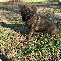 Adopt A Pet :: Pepper - Monroe, NC