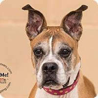 Adopt A Pet :: Sister Bertrille - Hurst, TX