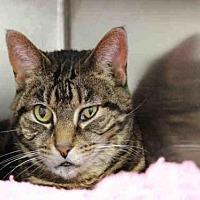 Adopt A Pet :: DELENN - Decatur, IL