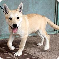 Adopt A Pet :: Eliot - Albuquerque, NM