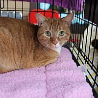 Adopt A Pet :: Tiny - Yardley, PA