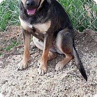 Adopt A Pet :: Matilda - Wytheville, VA