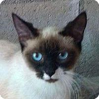 Adopt A Pet :: DELILAH - Santa Monica, CA