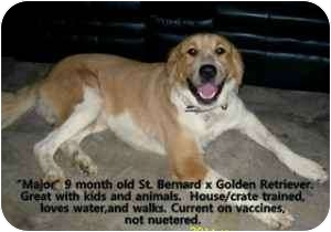 Golden retriever puppy rescue colorado springs