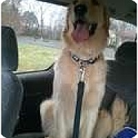 Adopt A Pet :: Buddy - Murfreesboro, TN