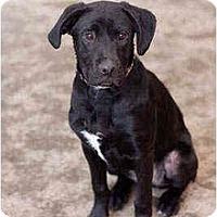 Adopt A Pet :: Jet - Portland, OR