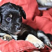 Adopt A Pet :: Teddy - San Diego, CA