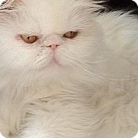 Adopt A Pet :: Florence - Beverly Hills, CA