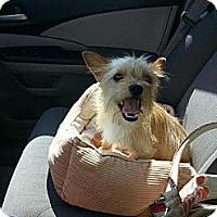 Adopt A Pet :: Chewy - Sugar Land, TX