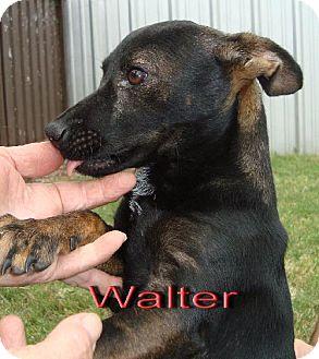 Terrier (Unknown Type, Medium) Mix Dog for adoption in Coleman, Texas - Walter
