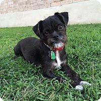 Adopt A Pet :: Mario Lanza - Austin, TX