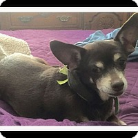 Adopt A Pet :: CHACHA - Winchester, CA