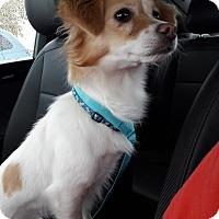 Adopt A Pet :: Skeeter - Salem, OR