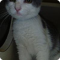 Adopt A Pet :: Denny - Hamburg, NY