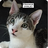 Adopt A Pet :: Frankie - Santa Monica, CA