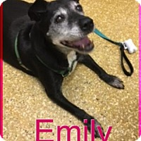Adopt A Pet :: Emily - Norfolk, VA