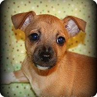 Adopt A Pet :: Ruby - Lodi, CA