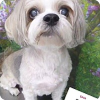 Adopt A Pet :: Birre - Las Vegas, NV