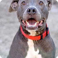 Adopt A Pet :: Firefly - Pensacola, FL