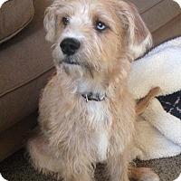 Adopt A Pet :: Sherlock - Greensboro, GA