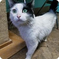 Adopt A Pet :: Gaige - West Des Moines, IA
