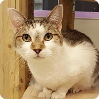 Adopt A Pet :: Tee Rex - Grayslake, IL