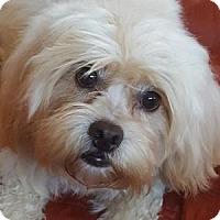 Adopt A Pet :: Sparkle - La Costa, CA