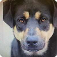 Adopt A Pet :: Timber - LAKEWOOD, CA