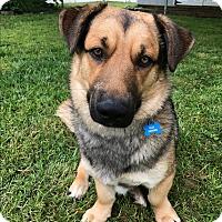 Adopt A Pet :: Link - Baltimore, MD
