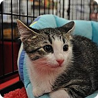 Adopt A Pet :: Maddy - Port Republic, MD