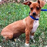 Adopt A Pet :: Marcia - Gilbert, AZ