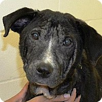 Adopt A Pet :: Lupita - Houston, TX