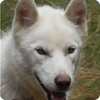 Adopt A Pet :: Cloud - Kettle Falls, WA
