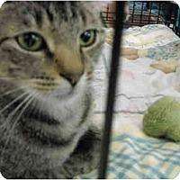 Adopt A Pet :: Dixie - Riverside, RI