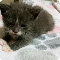 Adopt A Pet :: Kirby - McDonough, GA